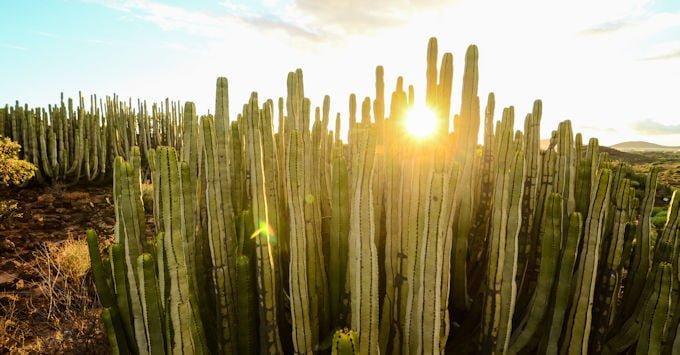 Arizona desert with cactus